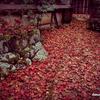 京都紅葉狩りの旅 1