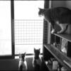 猫と光ケーブル