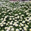 春の花、芽吹き