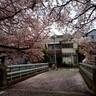 桜との対話