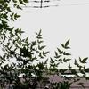 作曲工房 定点観察 2017-07-27(木)