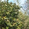 Nikonのデジイチ「D3000」で2017年3月6日までに撮影した写真です。「アブラチャン」の黄色い花が咲いています