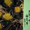 1月23日誕生日の花と花言葉
