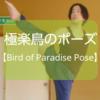 【ヨガ】「極楽鳥のポーズ」にチャレンジした内容をレポート!