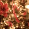 クリスマス。イエスキリストのことを少々。