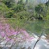 トウゴクミツバツツジ咲く湯ノ湖の風景