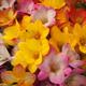 「優雅な春の女神」エアリーフローラ フェア