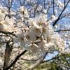 春~出逢いに感謝♡