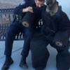 海外のフォトショバトル「お題:警官と犬」