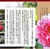【お出かけ情報】桜、チューリップ…の次はつつじとぼたん!階上町「臥牛山まつり」&南部町「ぼたんまつり」