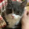 ☆ 猫 ミミ お誕生日 🎂