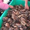 【イベント】笠岡ベイファームの牡蠣フェスティバル2020に行ってきた!牡蠣祭りで牡蠣詰め放題!