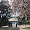 東北寺社巡りの旅 part.3(世界遺産 平泉〜毛越寺編)2019/5/2