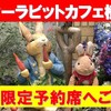 ピーターラビットカフェ横浜ハンマーヘッド店!全メニュービュッフェ付きでケーキもサラダも食べ放題