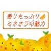 【朝みかん】果汁・香りたっぷりのミネオラが程よい酸味で濃い味わい