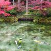 まるで動く絵画!紅葉彩る、秋の「モネの池」に行ってきたよ!