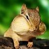 クルミを1日20g〜30g食べると肥満リスクが15%減少