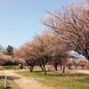 春も近いです。