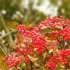 女子ひとり登山。10月の伊吹山は色とりどりの秋の宝石でいっぱい。