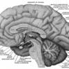 脳の理解は難しい~大脳を捉える