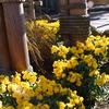 黄色い花が指定席