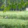 森の工房みみずく・就労継続支援B型あきの班研修 コスモス