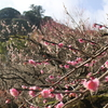 熱海の梅まつりを見てきました!