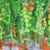 IT農業、スマートアグリ『兵庫ネクストファーム』