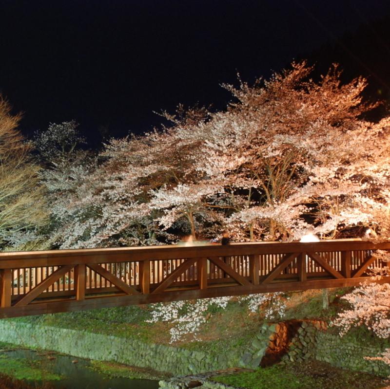 【2020】京都府 注目の夜桜「ライトアップスポット」