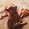 猫のアナオビ & トラベラーズノートのオタ仕様2 & プライムビデオで映画2本視聴