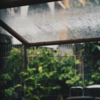 長い長い梅雨の影響