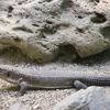 東山動植物園での写真06 トカゲ、ヘビ、カエル