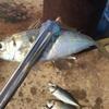 サビキ釣りの1番釣れる時間!朝マヅメと夕マヅメの攻略!