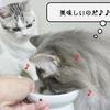 猫の病気 ~わが家の錠剤事情~