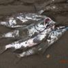 鮭釣り場 新規開拓!を考えてみます。/ 今日の紋別