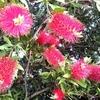 バラと思いきや、まるで「コップ洗い」のようなお花