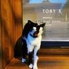 タイ猫はのんきやなぁー。ちょっと日本にニュースでも見よっと!