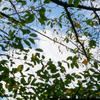 10月中旬:【世田谷区・駒沢オリンピック公園】周辺をお写んぽ。其の壱/駒沢オリンピック公園へ向かう道中にて