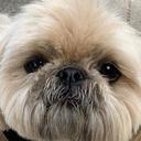寝起きの犬はポップコーンの臭いがする