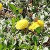 野生(自然)の花も美しい