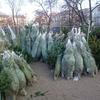 クリスマスツリーのマーケット