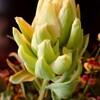 チューリップも咲き出した6