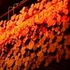 【オススメ5店】松山(愛媛)にある串焼きが人気のお店