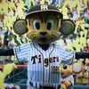【直前号】2019阪神ドラフト指名予想&虎太の希望指名順位🔥