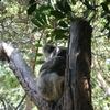 オーストラリア ハード1週間女子旅行6日目~シドニー②~「ワイルドライフシドニー動物園」