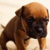成長期の犬とロイヤルカナンスタータームース及びロイヤルカナンジュニア