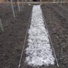 きゅうりの畝作り