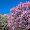 新宿御苑 2020春