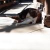 暑くて猫もほとんど見かけない