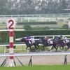 東京芝1800m(2歳戦)種牡馬別ランキング
